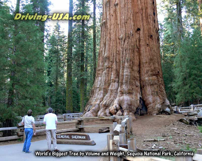 Park Sequoia National Full Hookup Near they answer